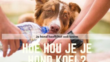 tips honden